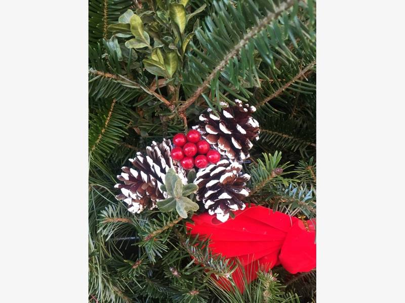 when and where to buy christmas trees near kingstowne