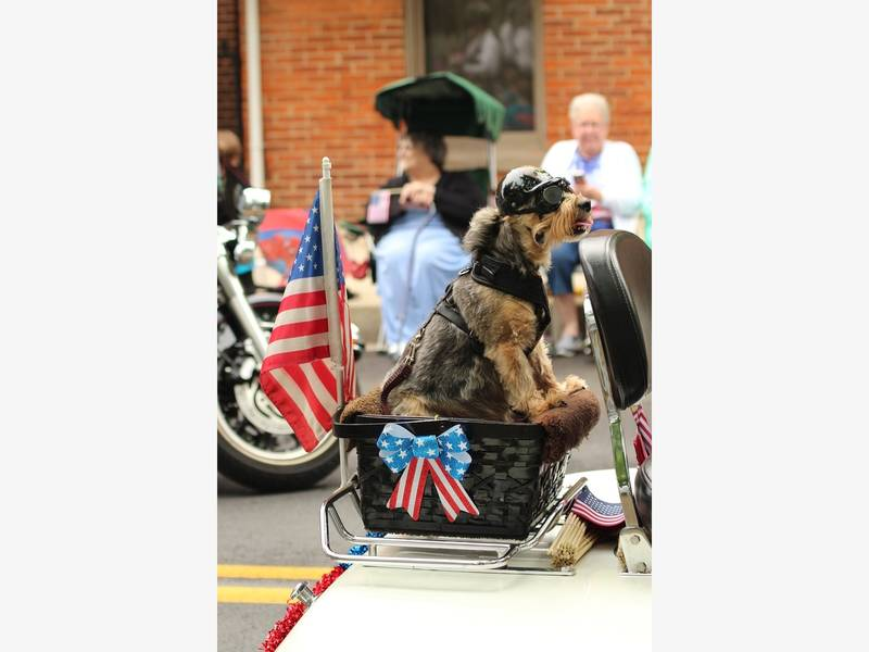 de789f79e45 Show Us Your Patriot Pet Pics On Independence Day