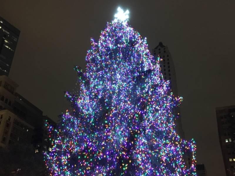 Grayslake Familyu0027s Spruce Wins Chicago Christmas Tree Contest & Grayslake Familyu0027s Spruce Wins Chicago Christmas Tree Contest ...