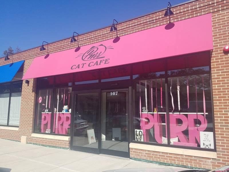 Purr Cat Cafe Boston