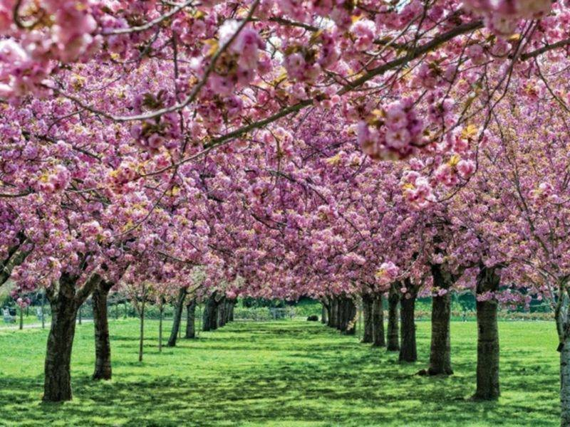 Locals fight to protect botanic gardens from developer 39 s - New york botanical garden parking ...