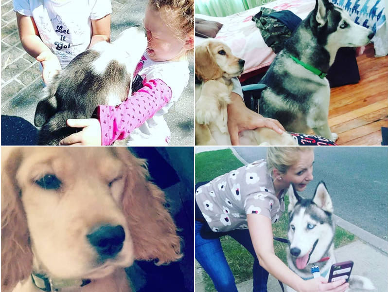 Puppy Time For Sale As New Business Caters To Those Without Pets