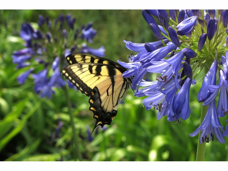 Greenwood Gardens To Host \'Birds, Bees and Butterflies\' Event In ...