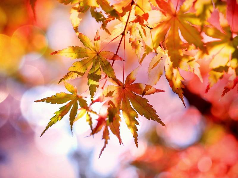 Fall Landscaping Ideas Part - 35: Fall Landscaping Ideas: 5 Colorful Plants For Northern Virginia