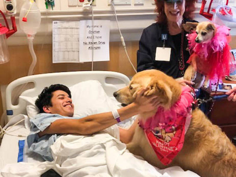 Therapy Dogs Show Love To Hospital Patients, Staff: Photos