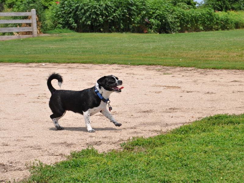 Dog Park Plainfield Il