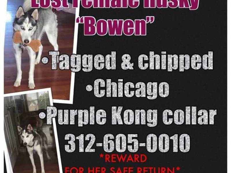 Lost dog bowen has been missing from joliet since march 15 lost dog bowen has been missing from joliet since march 15 solutioingenieria Choice Image