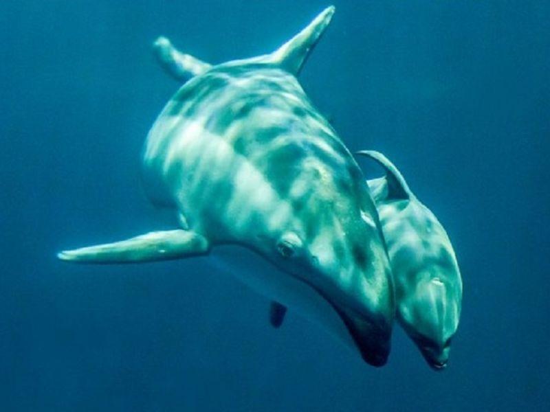 Free Days At Shedd Aquarium For 24 Days In September