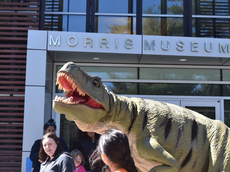 Dino Day Coming Up At Morris Museum Morristown Nj Patch