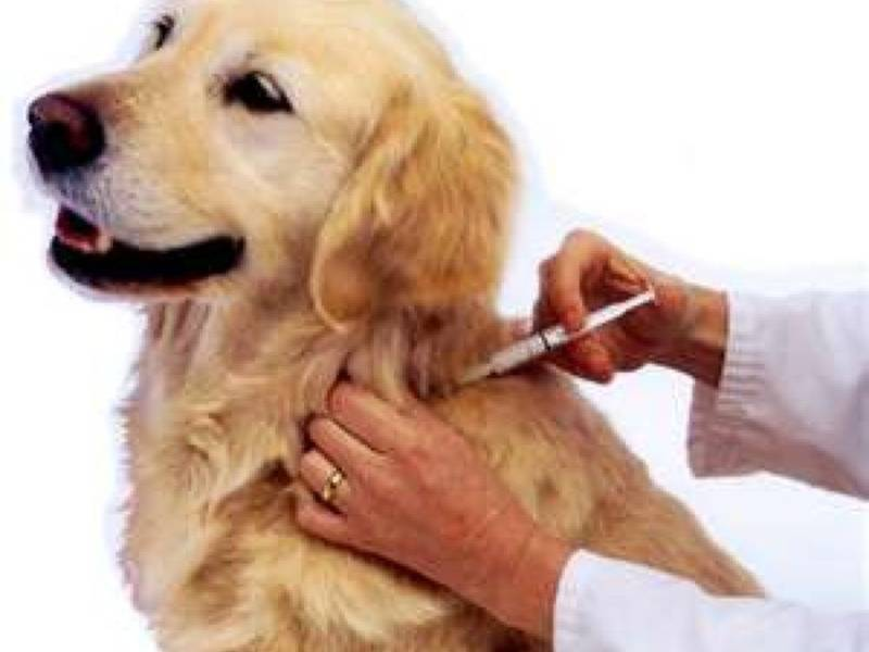 Free Rabies Shots For Dogs