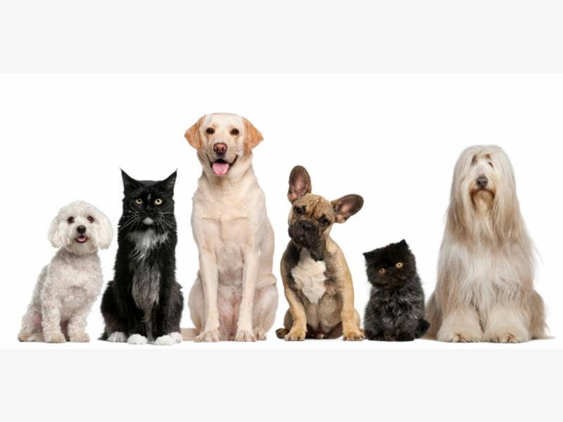 Pet adoption event planned in algonquin algonquin il patch - Garden grove dog and cat hospital ...