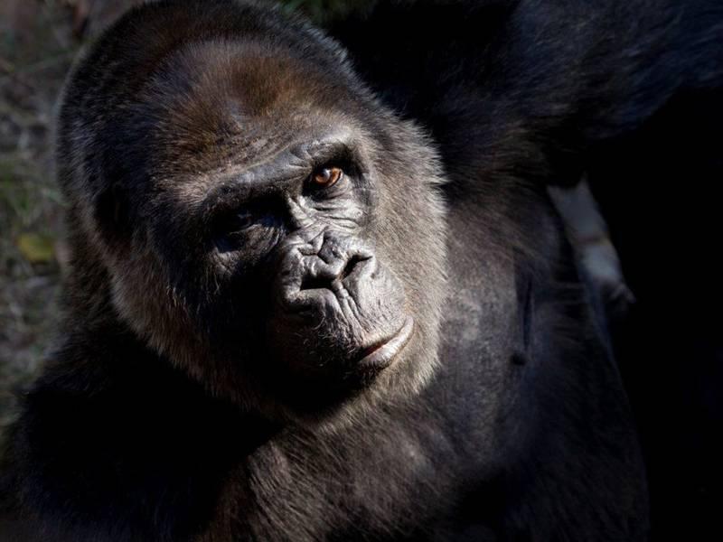 Zoo Atlanta Grandparents Day Presented By Kaiser Senior Advantage