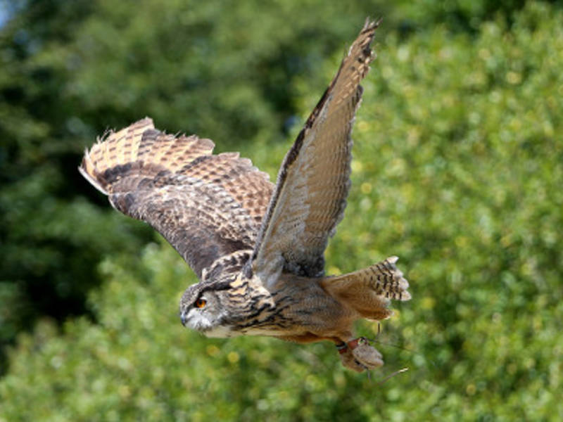 Learn How To Photograph Owls, Hawks, Raptors At Oak Mountain