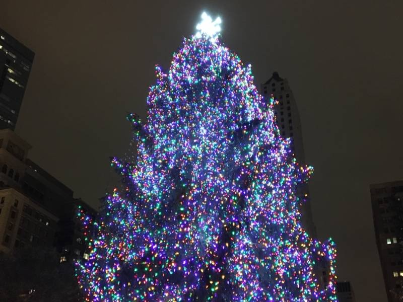 chicago picks official christmas tree for 2017 - Christmas Tree In Chicago