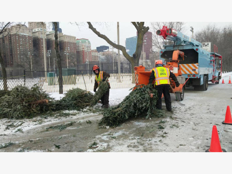 how to recycle your christmas tree in chicago - Chicago Christmas Tree Recycling