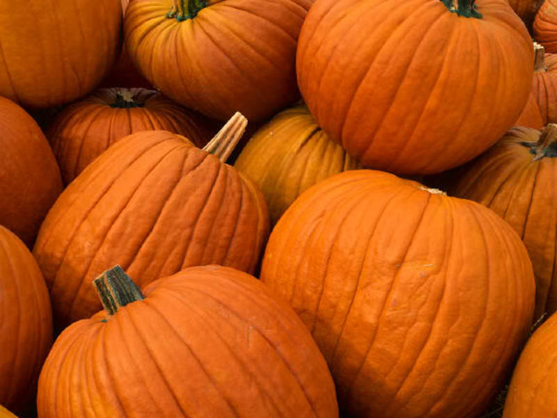 Tips for Trash: How to Dispose of Your Halloween Pumpkin | Old ...