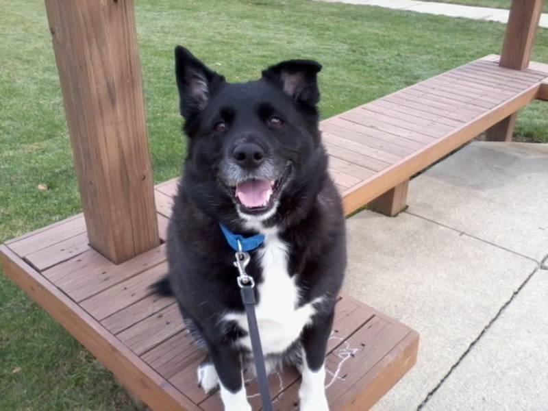 Cuyahoga Dog Kennel