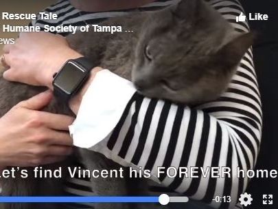 Watch: Senior Cat Rescued 3 Days After Being Dumped On Interstate