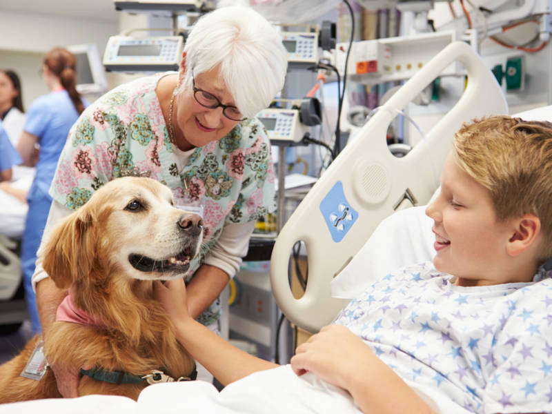 how pet therapy helps patients manage stress and anxiety | phoenix ...
