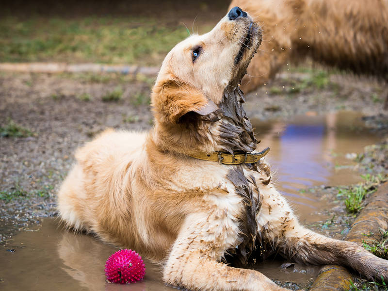 Control Your Dog S Fall Shedding With A Thorough Grooming