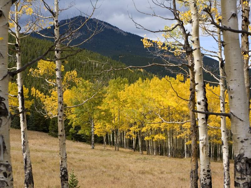 Fall Colors Early In Colorado This Year Boulder Co Patch