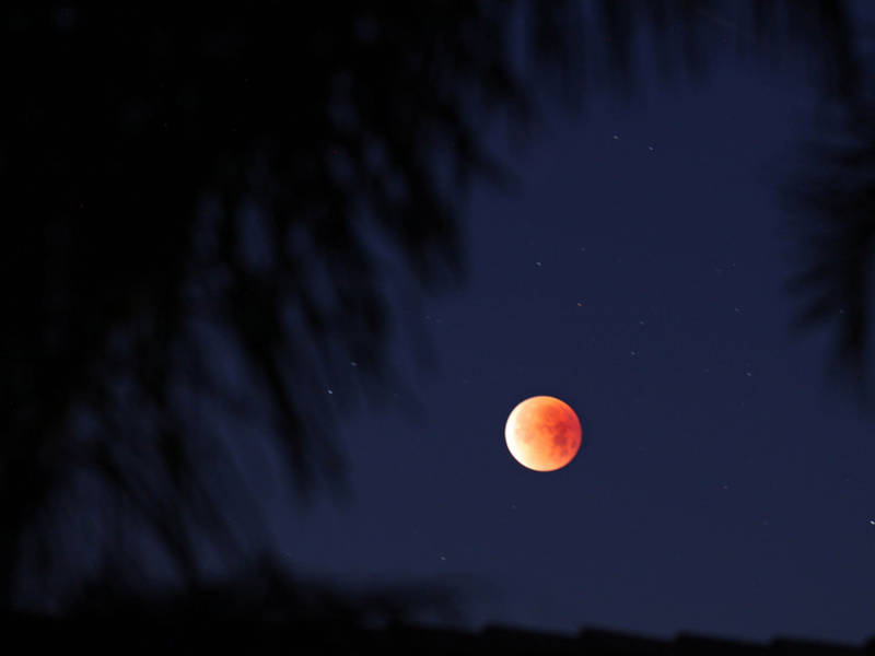 Super Blood Wolf Moon Eclipse: How To See It In Silicon Valley