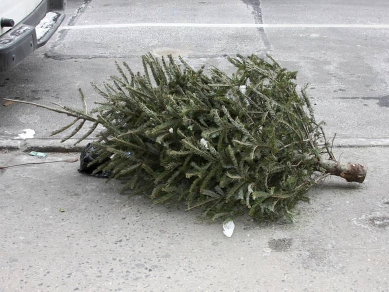 Natick Christmas Tree Removal