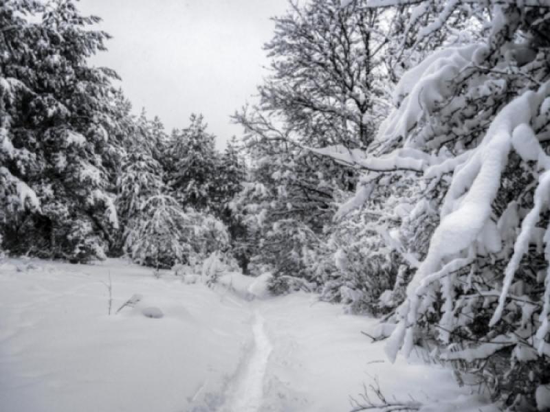 Snowier than normal winter for illinois old farmer 39 s for Farmer s almanac 2017 winter forecast