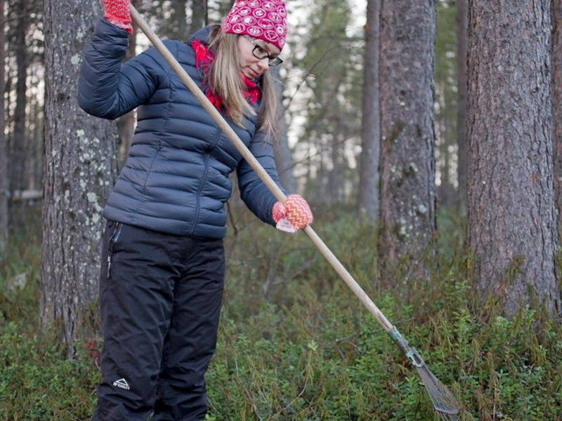 Image result for photos of people raking forests in Finland