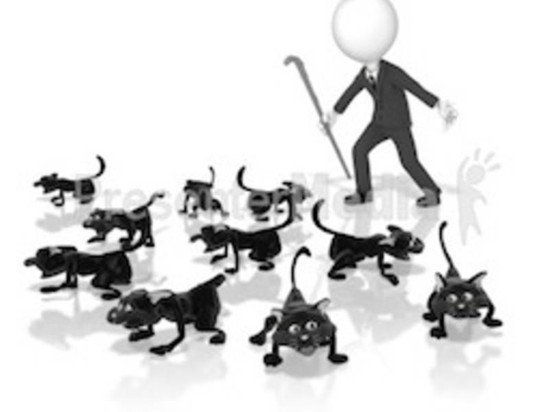 herding cats doylestown pa patch