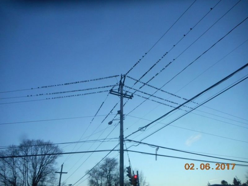 Birds on Street Wires in the Winter | Wallingford, CT Patch
