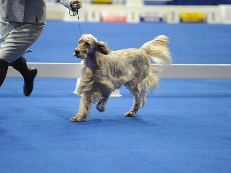 Cash prizes for dog shows
