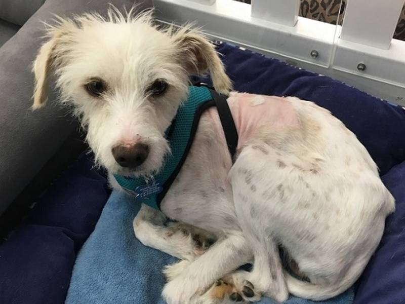 Shelter Hope Pet Shop Helps Animals During Recent Wildfires