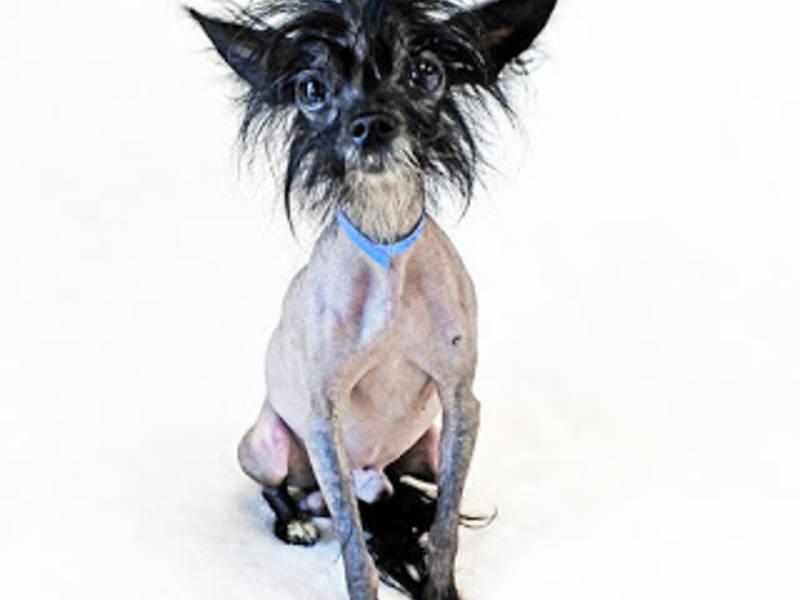 Naked dog Nude Photos 17