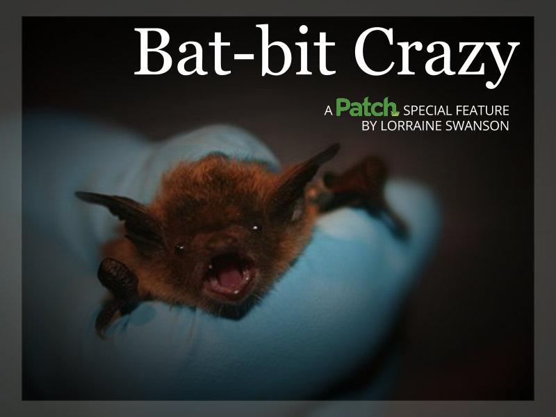 Bat Bit Crazy The Midwest Is Just Unbelievably Infested