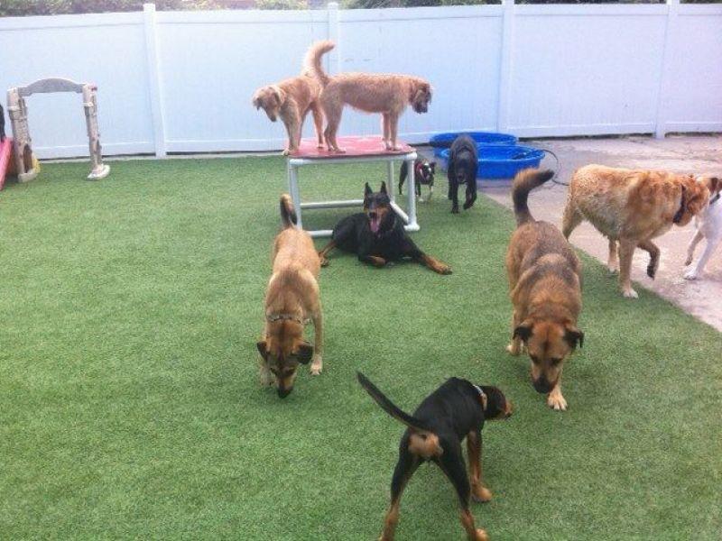 Dog Adoption Shelters In Illinois