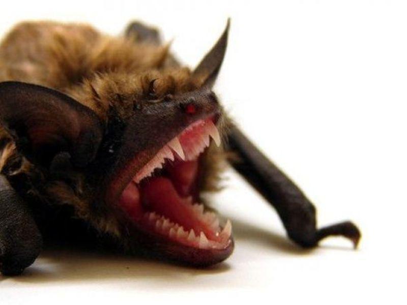 Rabid Bat Found Inside Crestwood Apartment Complex