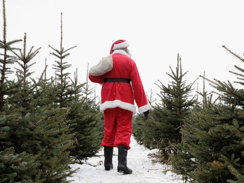 Where To Cut Down Your Own Christmas Tree Near Chicago - Where To Cut Down Your Own Christmas Tree Near Chicago Crystal