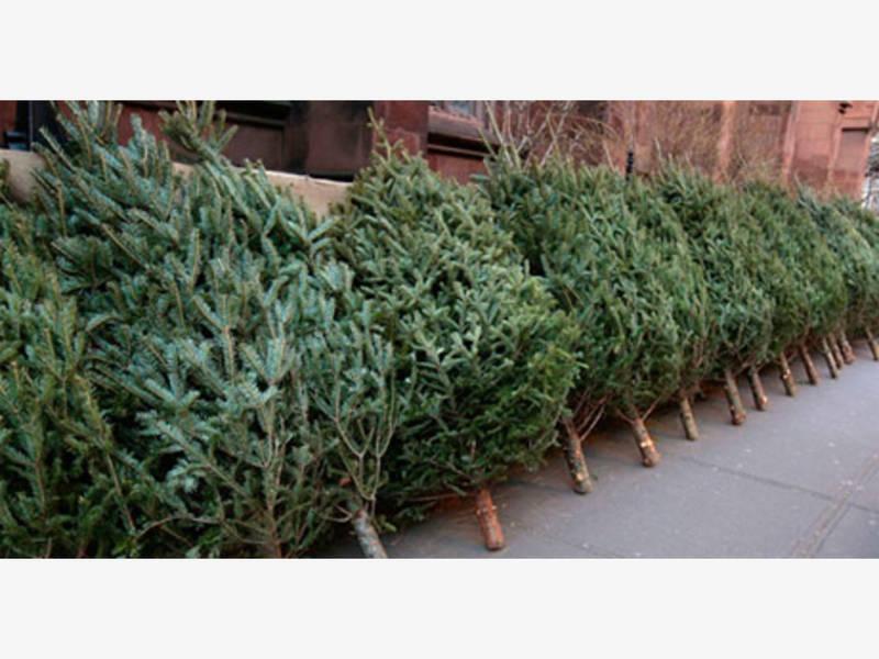 Village Christmas Tree Pickup And Holiday Light Recycling Program