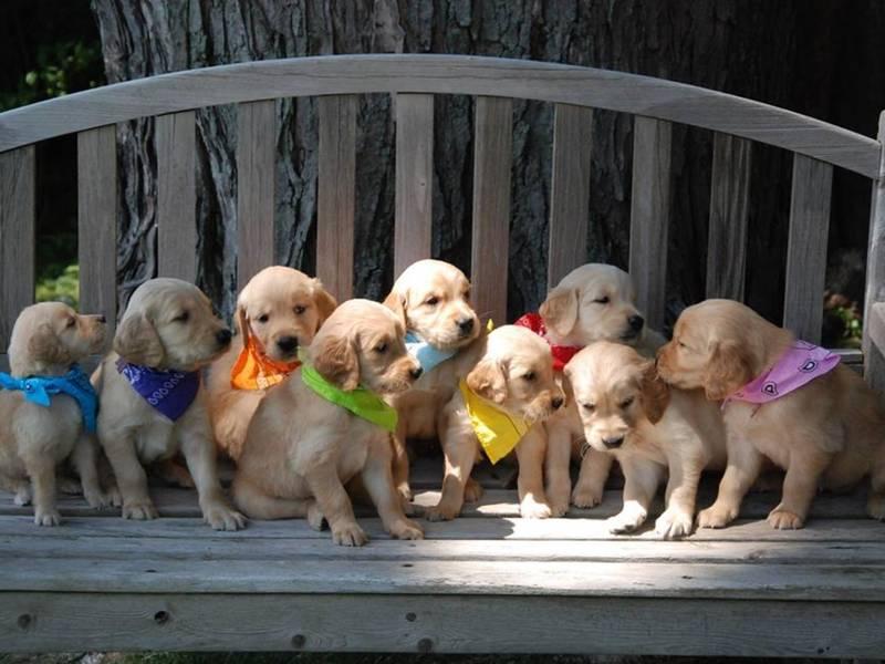 Service Dog Training Group Seeks Volunteers Mokena Il Patch