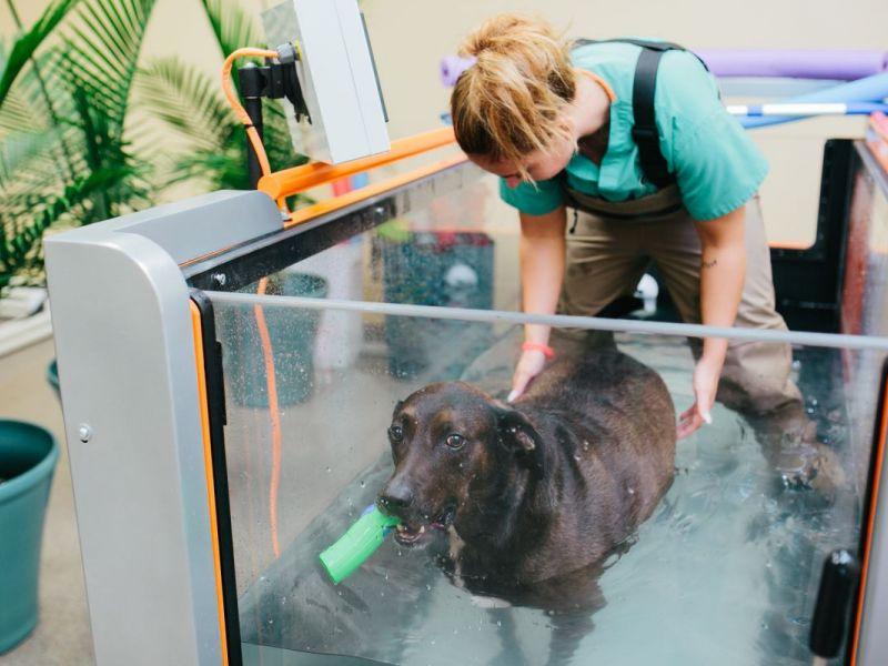 New Suburban Pet Rehab Center Has Underwater Treadmills