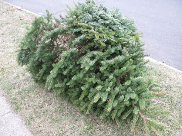 Carlsbad: Recycle Your Christmas Tree