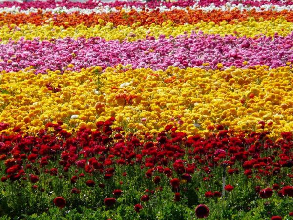 Flower fields carlsbad coupons 2018