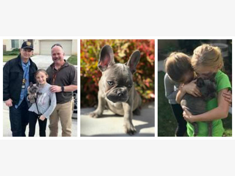Stolen Pup Resold Twice Reunited With Family In San Diego County