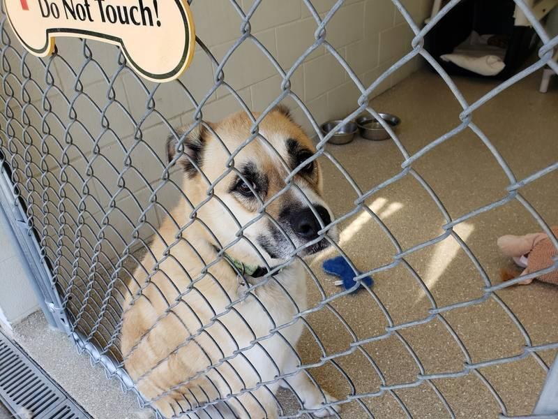 Riverside Adoption Dogs