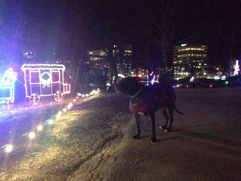 dogs visit columbia s symphony of lights display columbia md patch
