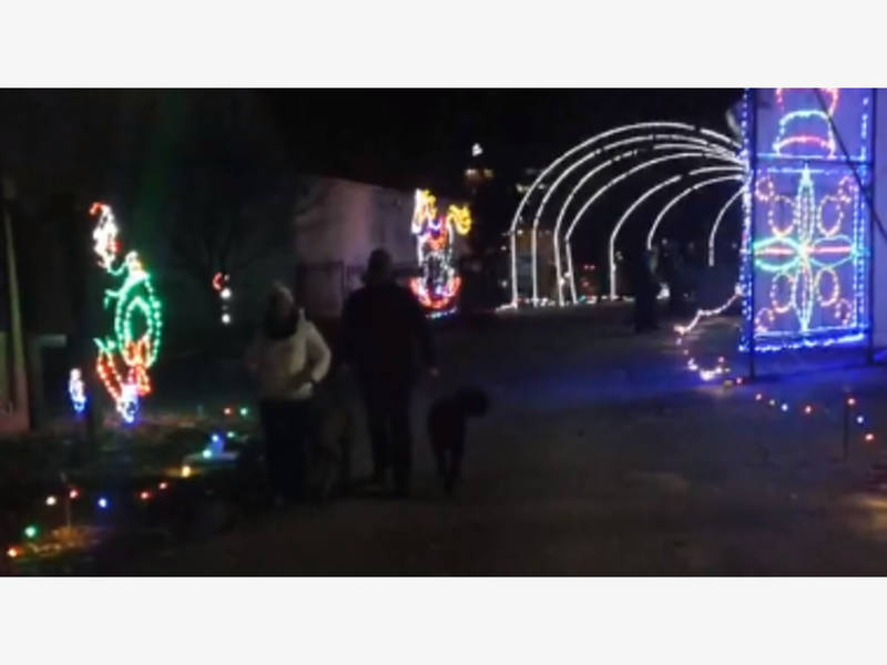Dogs visit columbias symphony of lights display columbia md patch aloadofball Images