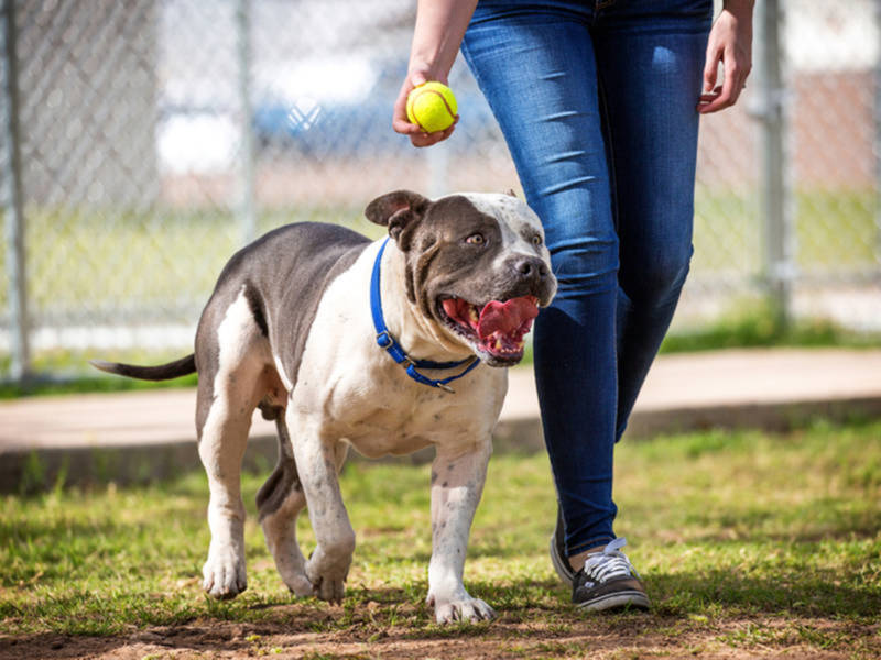 Off Leash Dog Parks In Maryland