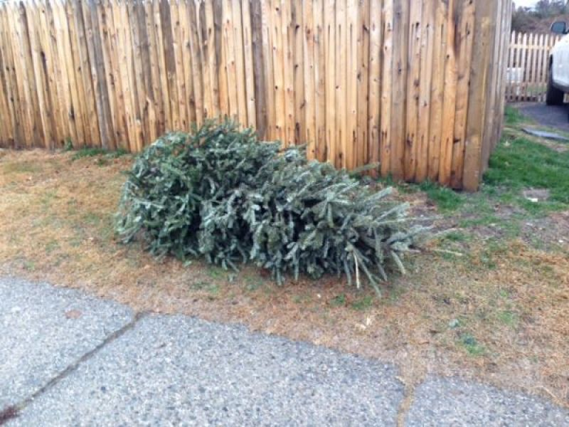 Discarded Christmas Trees to Be Picked Up in Larchmont ...