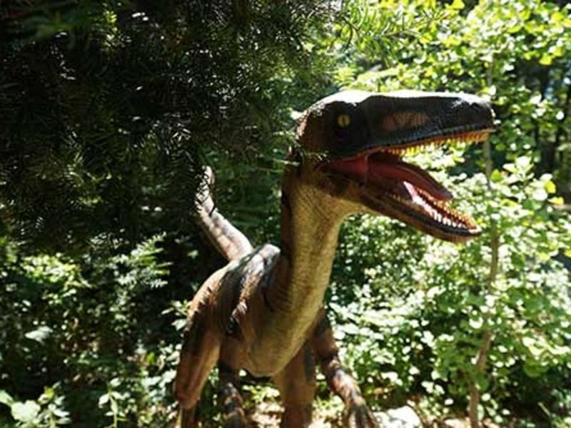 Westchester\'s Lasdon Park Home To Dinosaur Garden   Bedford, NY Patch
